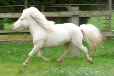 Falabella Foto Album Horse Fun Jouwweb Nl